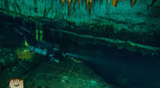 A diver cruises along a big room