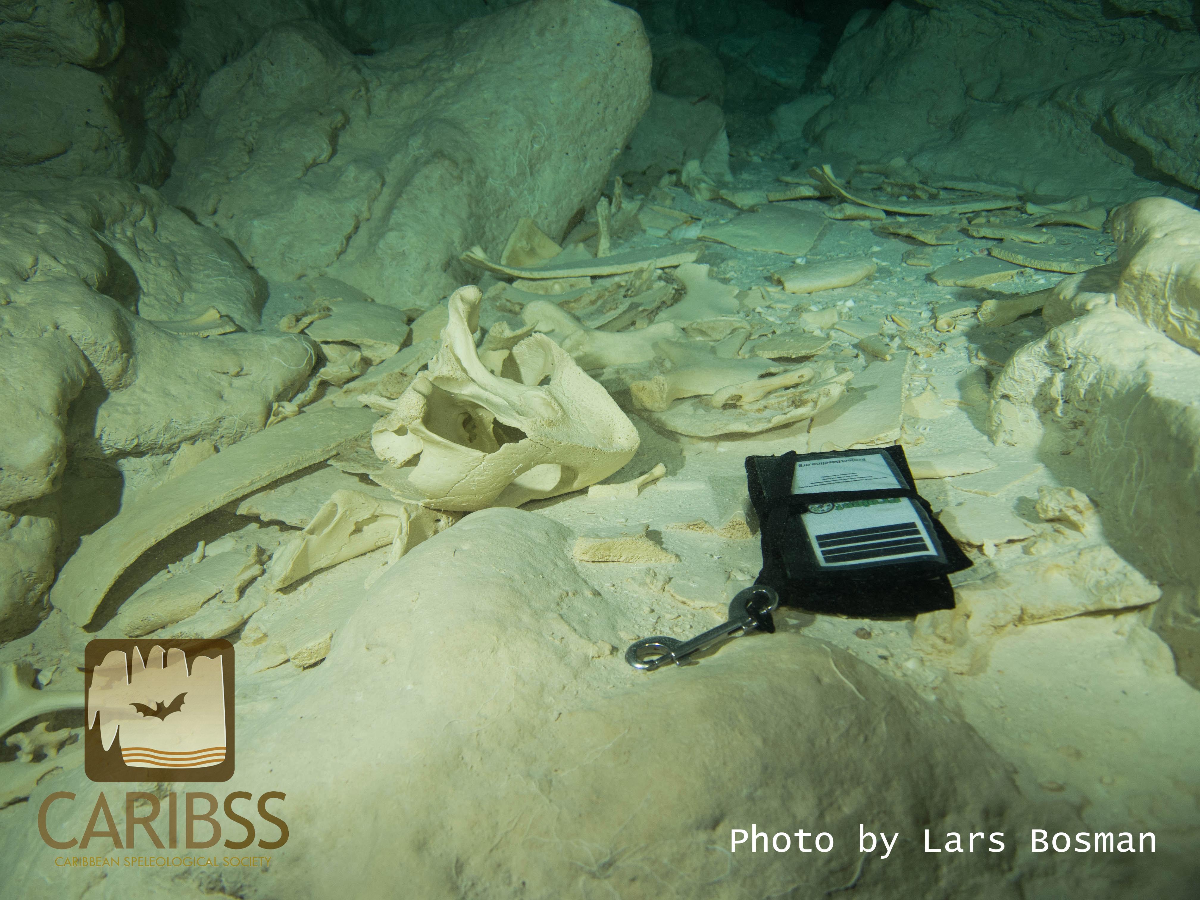 Bones covering the floor.